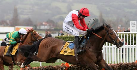 Celestial Halo: Hurdling again after spell over fences.