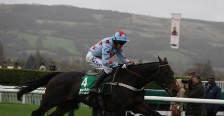 Dave's Dream: Lands big Cheltenham gamble.