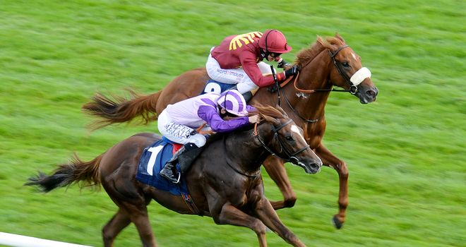 Cavaleiro: Could be Leger horse but run in the Derby not ruled out either