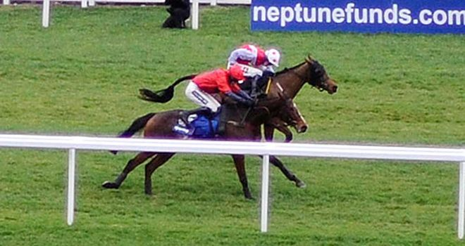 Houblon Des Obeaux: Made it two out of two over fences at Wincanton