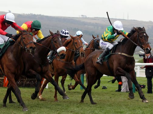 Cheltenham: Maggio could race there on Sunday