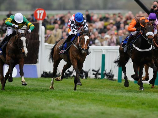The Giant Bolster: 25/1 for the Gold Cup