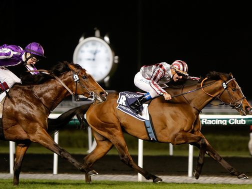 Cirrus Des Aigles: Won't run in Ireland but clash with Frankel at Ascot is in on
