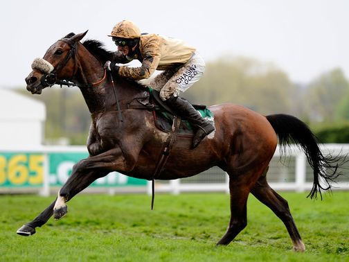 Tidal Bay: Well fancied at Leopardstown