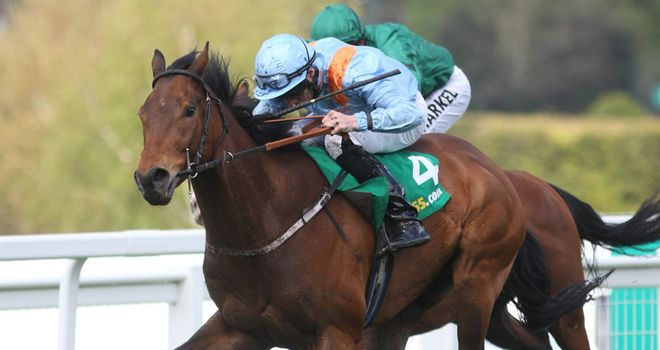 Penitent: Could head to Ireland if conditions are suitable