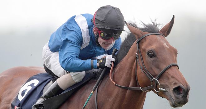 Hawaafez: Should be in the mix at Haydock on Saturday