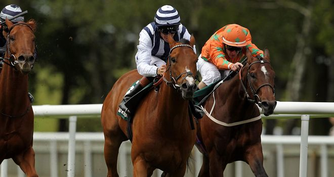 Mirza: Set for a prep race before the Ayr Gold Cup