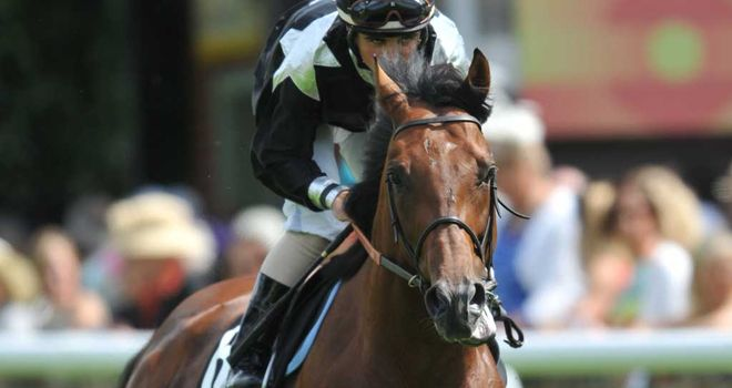 Joshua Tree: Could head to Japan for his next race
