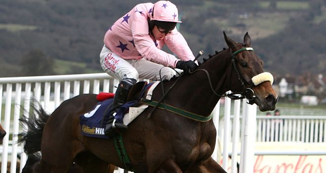 Go Native: Fell at Punchestown on Sunday