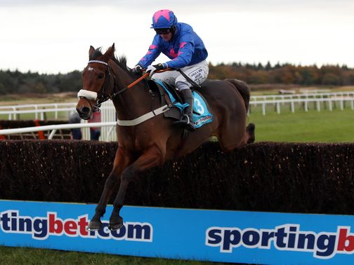 Cue Card: Won't run in Gold Cup at Cheltenham