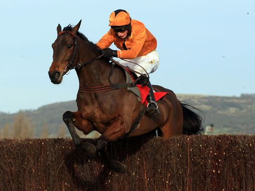 Maljimar: Runs at Cheltenham next month