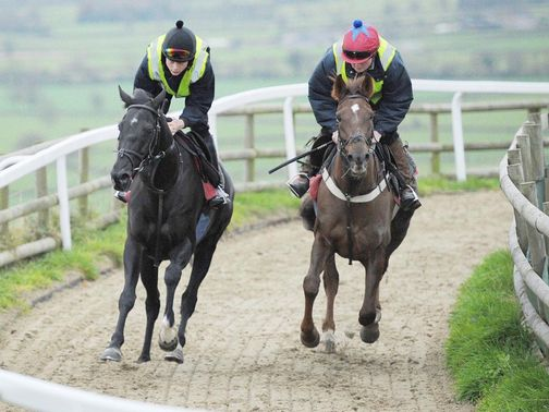 Sanctuaire (left): Works at Paul Nicholls&#39; yard on Wednesday