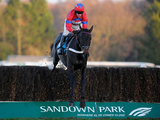 Sprinter Sacre: Tops decs for Victor Chandler Chase