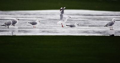 Rain frustrates Holland again
