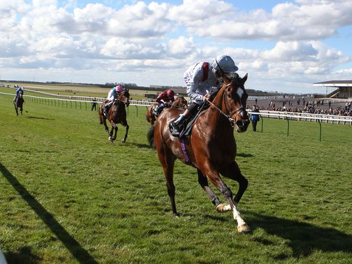 Toronado: Goes for International