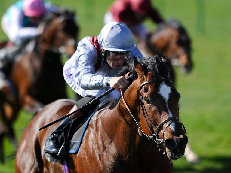 Toronado: Can win the 2000 Guineas