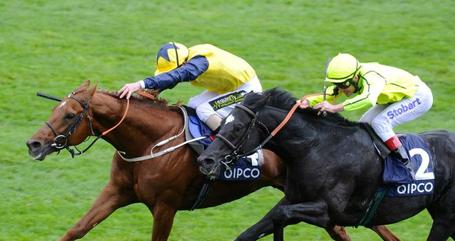 Dandino (r) was narrowly denied in the American St Leger