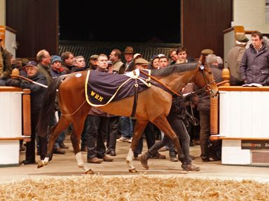 Purr Along goes through the ring (www.tattersalls.com)