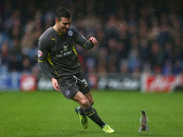 David Nugent chases a squirrel off the pitch at Loftus Road