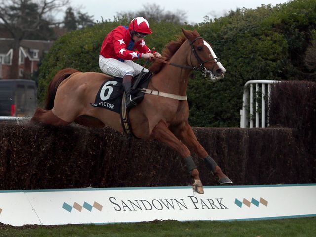Sire De Grugy: A deserved winner of the Tingle Creek