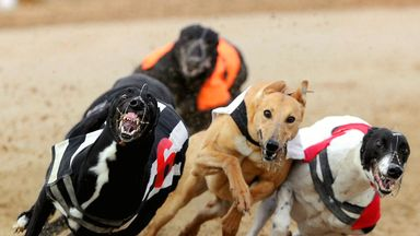 greyhound racing picks cavs live score