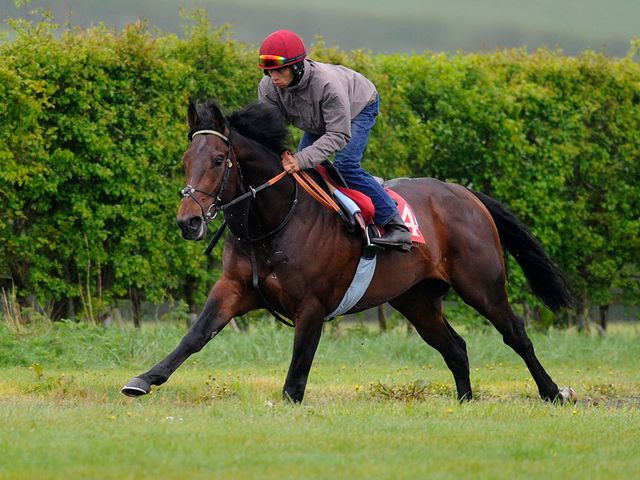 Bunker makes his way up the gallops at Richard Hannon's stables