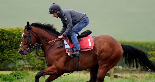 Toronado: Presently pleasing trainer with is work on the gallops