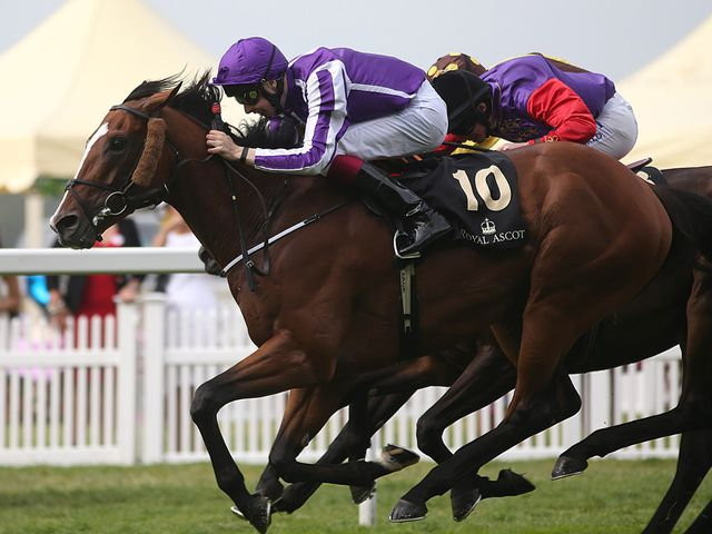 Leading Light edges out Estimate to win a thrilling Gold Cup