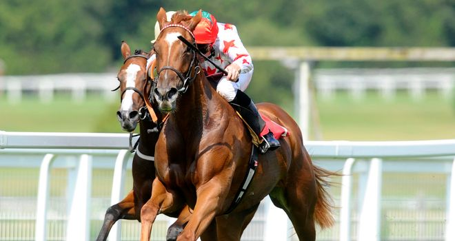 Alonsoa: Newmarket hopeful