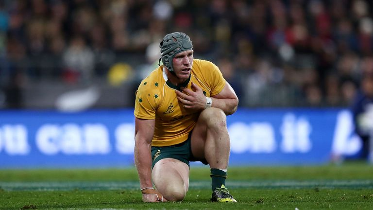 Australia flanker David Pocock could return for the Bledisloe Cup