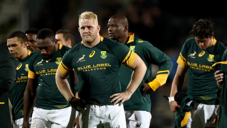 Image result for south africa rugby