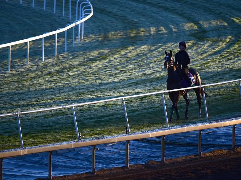 Lord Nelson scratched from Breeders' Cup Sprint