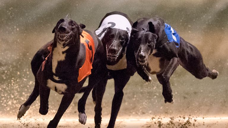 TOPSHOT - Greyhounds compete on the track during an evening of greyhound racing at Wimbledon Stadium in south London on March 18, 2017. March 25 will see t