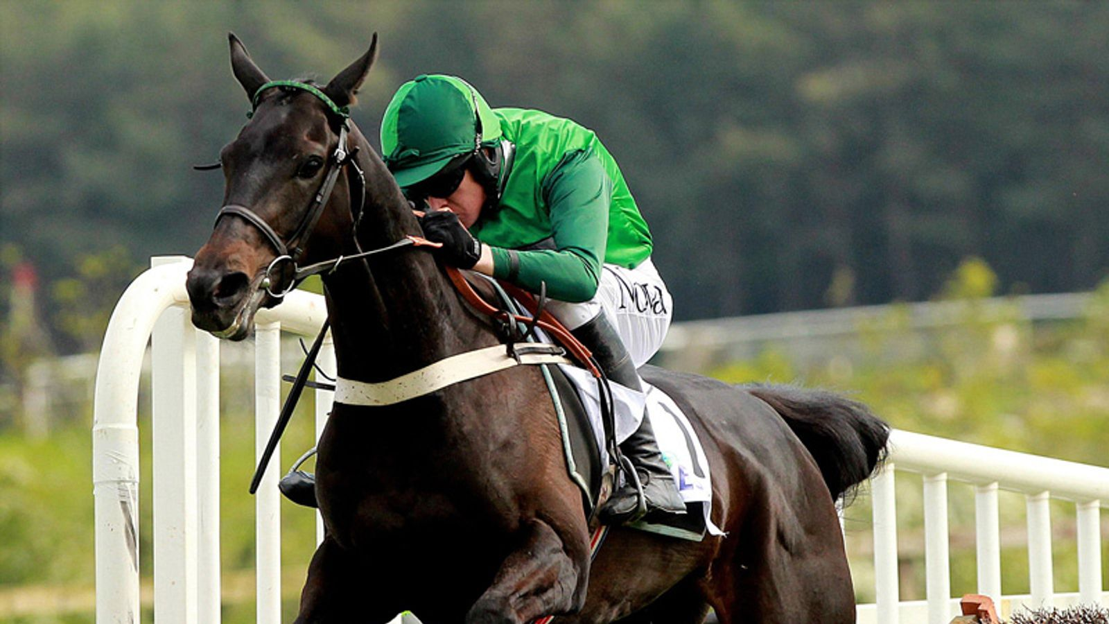 Grandouet champion hurdle betting cricket betting in india legality