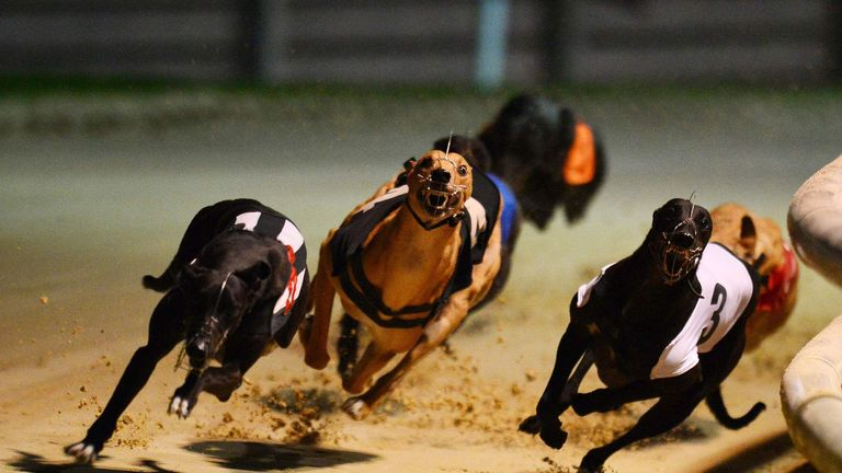 Greyhounds will be chasing the hare at Wimbledon for a while yet