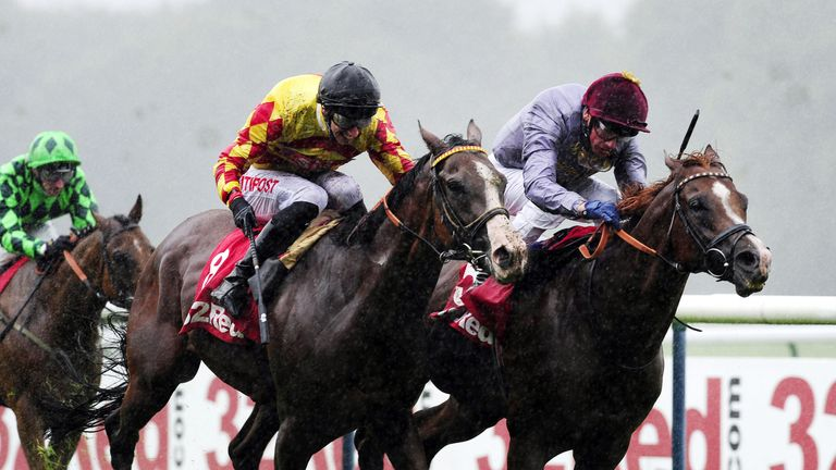 Mitchum Swagger (centre): Could be the one to be with at Haydock on Saturday, according to Alex.