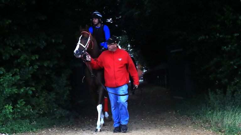 Bucchero is walked out to the gallops by trainer Tim Glyshaw